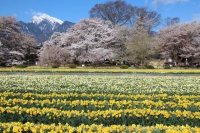 山高神代桜と八代ふるさと公園