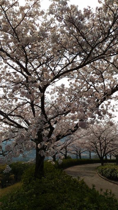 エディオンスタジアムの桜