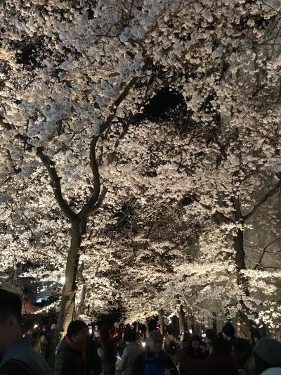 春の京都 桜求めて百鬼夜行 Vol.2 伊右衛門サロンと夜桜お七の世界♪さくら さくら 花吹雪~♪