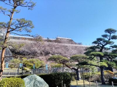 初春、桜花咲く山梨県甲府市を訪れました!!(*^-^*)朝の気温は0℃とまだまだ寒いです!!