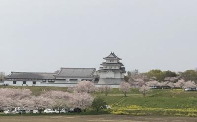 関宿城と清水公園で桜堪能🌸千葉県野田市