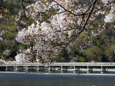 最終日 平成最後のお花見は嵐山