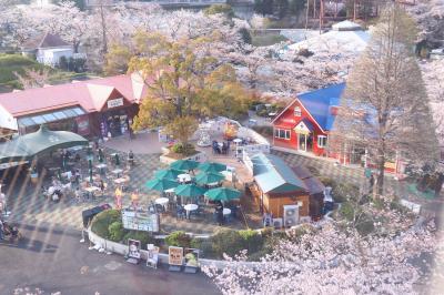 よみうりランド、ゴンドラで空中桜散歩・・・