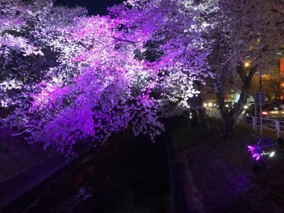 2019年04月 五条川桜夜景