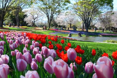 雨と雨の間の絶好の晴れた日の昭和記念公園