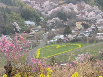 岳温泉再訪、幸手権現堂堤と花見山の桜はド満開!
