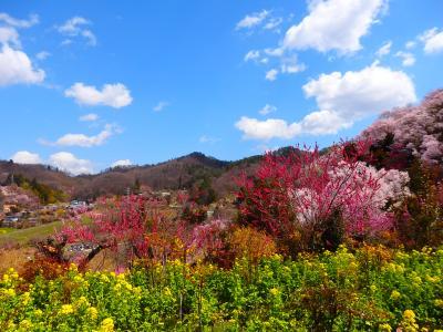 母と行く、土湯温泉の猫宿松雲閣に泊まる福島旅!①宿に行く前に、ずっと行きたかった花見山公園へ!