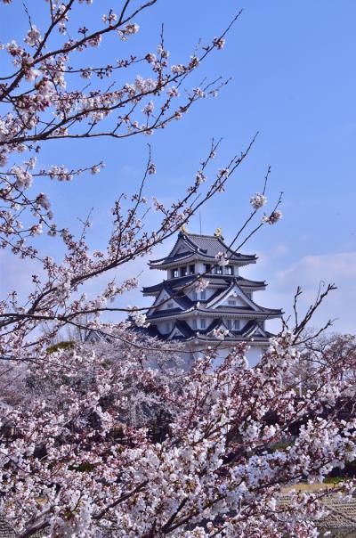 すのまた(墨俣一夜城)桜まつり