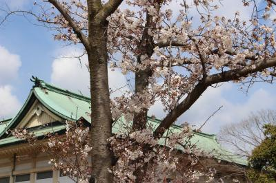 さくら咲く京の都へ【みやこメッセ・平安神宮・岡崎茶寮 豆狸・錦市場】