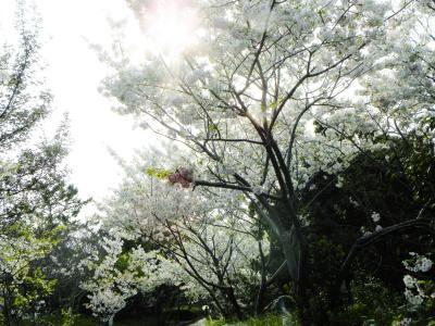 2019年春 兵庫の桜を追う、須磨浦公園~垂水万葉歌碑の道~淡路島!