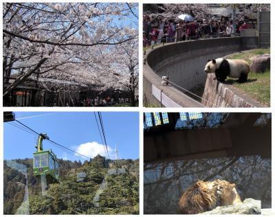 桜咲く王子動物園と早春の摩耶山掬星台