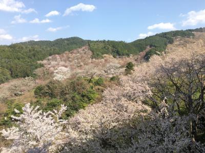 中年女子、高野山と吉野千本桜の旅へ行く!②