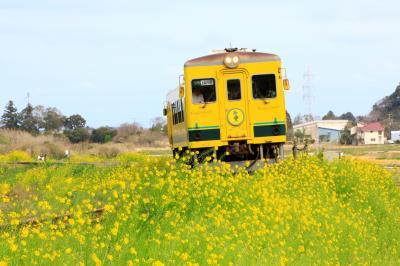 黄色いムーミン列車と菜の花畑 春のいすみ鉄道写真ツアー