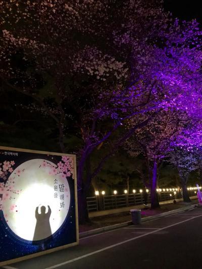 韓国 ソウルひとり旅(5)夜桜