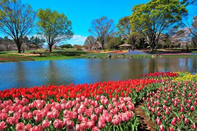 東京・昭和記念公園~チューリップと桜が綺麗でした(2019年4月11日)