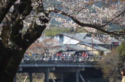 京都桜紀行2019 嵐山、天竜寺