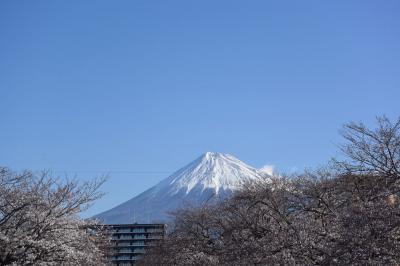 桜を見ながらの散歩・小潤井川 2019.04.01
