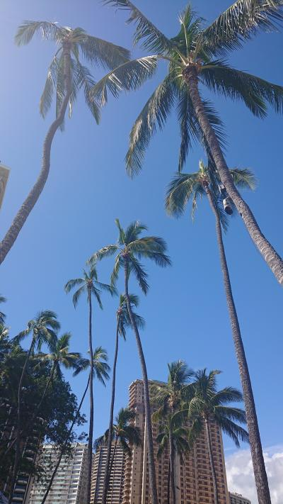 2019年春休み ノープランのハワイでどう過ごす?THE Grand Islander by Hilton Grand Vacation後編