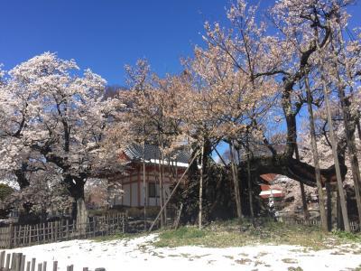 神代桜、高遠桜、奈良井宿一泊ドライブ旅行