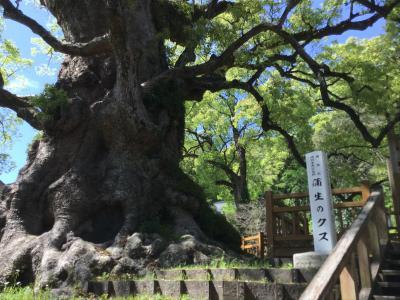 蒲生町の大楠を見に行ってみよう