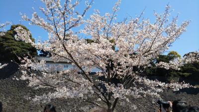 皇居からお花見散歩