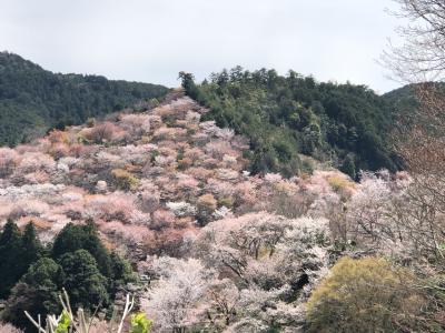 吉野の桜、中と上千本が薄ピンクのパッチワーク