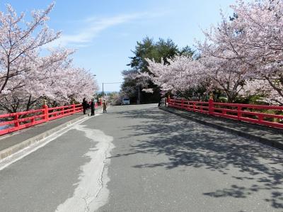 「茨木・弁天さんの桜」は、昨年6月の地震、9月の台風にも負けず、優雅に、華やかに咲いていました。(2019)