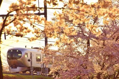 西武鉄道の新型特急「Laview」と入間川に咲き広がる満開な桜の風景を探しに訪れてみた