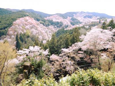 三万本の桜が織りなす吉野山の平安絵巻