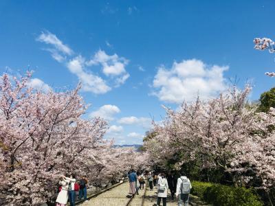 2019京都の桜