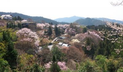 春、吉野へ花見に