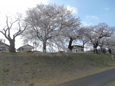 桜100選に選ばれている桜祭りはいかが・・・