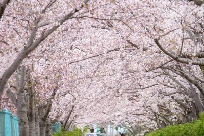 陸上競技場なのに歩きながら花見をしましょう♪ ~稲美町花めぐり③~