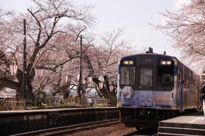 のと鉄道七尾線 能登さくら駅の桜