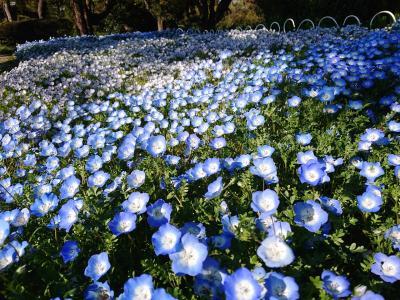 4月13日 横浜市児童遊園地やこども植物園の花々