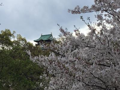 大阪多国籍グルメ⑪ 大阪城の桜と桃園 パキスタン料理&猫カフェ(=^ェ^=)