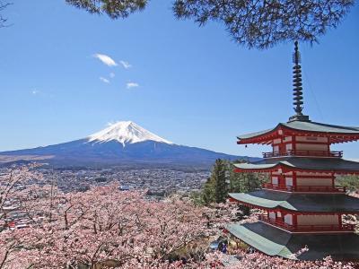 山梨 新倉山浅間公園桜まつり