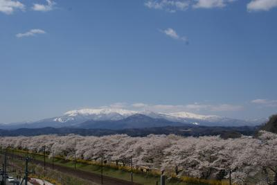 白石川堤「一目千本桜」・船岡城址公園「桜まつり」