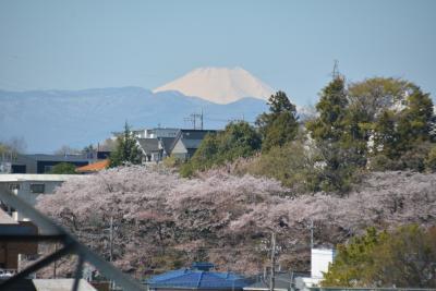 東京散歩 乞田川から都立桜ケ岡公園を抜け永山の10月桜の並木道を歩きました。