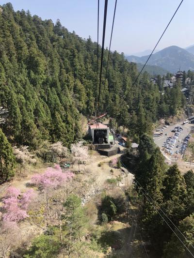 日本3大桜の山高神代桜と甲府へ 2日目