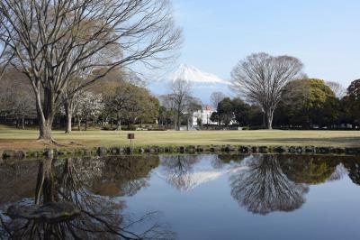 散歩・富士市内 2019.03.25 =晴れて綺麗な富士山が見えました=