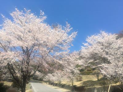 宇都宮の桜の穴場 北山霊園浅間山