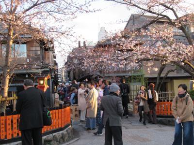町屋の片泊まりで巡る京都の桜2019  その9 南禅寺・白川・祇園巽橋の桜・おかるのカレーうどん