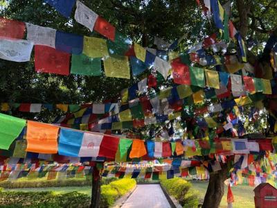 ネパール2日目 ルンビニ