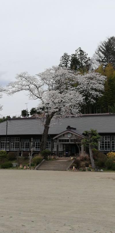 旧上岡小学校の桜がいい感じに