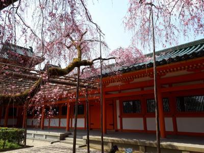 「そうだ 京都、行こう。」春の特別拝観
