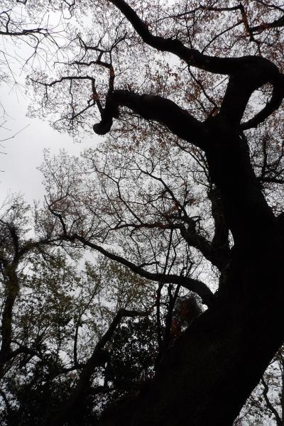 野村研究所跡から峯山経由常盤