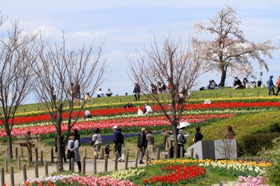 奈良県営馬見丘陵公園 チューリップが綺麗でした。