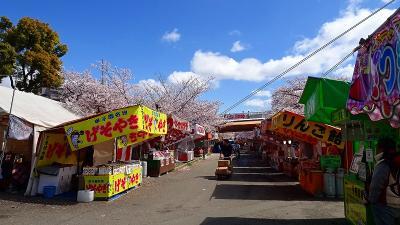 久し振りの・・・大阪造幣局桜の通り抜け その1。