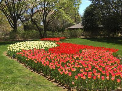 国営昭和記念公園花まつり
